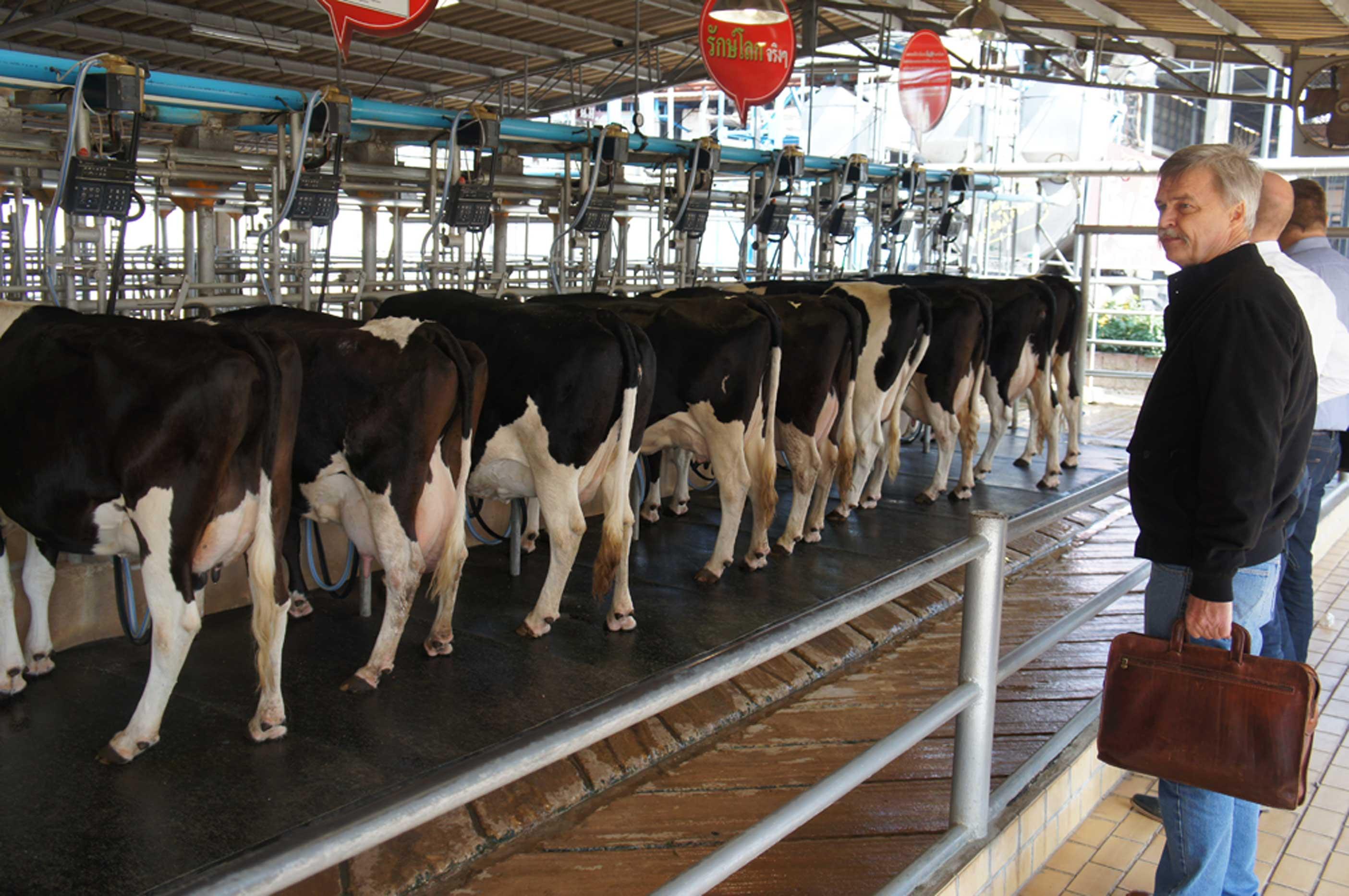 Image result for Thai livestock