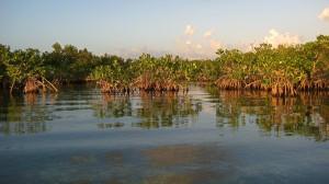 burma_mangroves